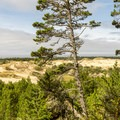 View from the upper switchbacks along the Oregon Dunes Loop Hike.- Best Hikes on the Central Oregon Coast