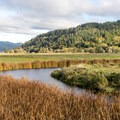 The meadows of Dean Creek Elk Viewing Area.- Loon Lake: The Oregon Coast's Hidden Summer Destination