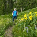 Hiking through lush wildflower meadows at Lost Lake.- 10 Best Day Hikes in Yellowstone National Park