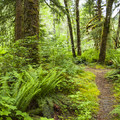 Hemple Creek Day Use Area.- Mountain Loop Highway Itinerary