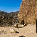 Heading out on the trail.- 11 Best Day Hikes in Joshua Tree National Park