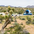 Red Rock Campground with a Joshua Tree.- A Guide to Camping in the Mojave Desert