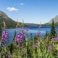 Two Medicine Lake and fireweed wildflowers.- Glacier National Park