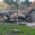 African lions (Panthera leo) at the Oregon Zoo.- Washington Park