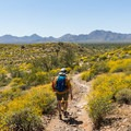 Along the aptly named Scenic Trail in McDowell Mountain Park.- 15 Must-Do Hikes Near Phoenix, AZ