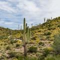 Feeling small in the expansive desert on Quartz Loop Trail.- 15 Must-Do Hikes Near Phoenix, AZ