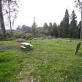 Walk-in campsites at Hosmer Grove Campground.- Haleakalā National Park