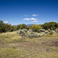 Thickets of mountain mahogany and sagebrush near the South Rim Campground at Black Canyon of the Gunnison.- Black Canyon of the Gunnison National Park