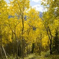 Aspen along the Sneffels Highline Trail.- Colorado's Top 10 Outdoor Destinations