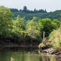 Paddling through some of the acricultural land flanking the North Fork of the Nehalem River.- Paddling the West