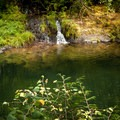 One of the many pools in this lower section of Fall Creek.- 10 of Eugene's Best Swimming Holes