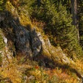 Mount Seymour Trail.- The West's Best Hikes for Fall Colors