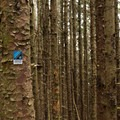The hike to China Beach is along the Oregon Coast Trail.- Navigating the Oregon Coast Trail