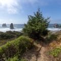 The first view of China Beach.- Samuel H. Boardman State Scenic Corridor
