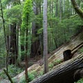 Trail to the Tall Trees Grove in Redwood National Park.- Redwood National + State Parks
