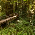 Looking back at a creek crossing on the Miner's Ridge Trail.- Redwood National + State Parks