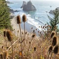 Teasel growing along the hillside over the Arch Rock Viewpoint.- Guide to the Samuel H. Boardman State Scenic Corridor