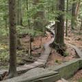 Old-school wood features on CBC.- Mountain Biking in British Columbia