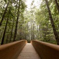 Bridge leading to the Lady Bird Johnson Grove Trail.- Redwood National + State Parks