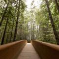 Lady Bird Johnson Grove Trail.- Northern California Winter Road Trip
