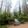 Dedication site for Redwood National Park.- Redwood National + State Parks