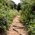 Once the Floras Lake Trail meets the Oregon Coast Trail, vegetation becomes more dense.- Exploring Oregon Watersheds: Adventure Brews