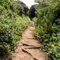 Once the Floras Lake Trail meets the Oregon Coast Trail, vegetation becomes more dense.- Navigating the Oregon Coast Trail