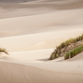 This section of the Oregon Dunes National Recreation Area is off-limits to motorized vehicles, so untracked vistas are plentiful.- Exploring Oregon Watersheds: Adventure Brews