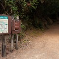 At Eel Creek Campground, you'll have direct access to the John Dellenback Trail from the road connecting the north and south loops.- A Guide to Camping on the Central Oregon Coast