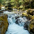 Brice Creek.- Oregon's 75 Best Day Hikes