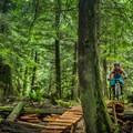 Mount Seymour Mountain Bike Trails: Old Buck and Pangor Loop.- 20 Amazing Adventures Near Vancouver, B.C.