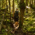 Exploring the woods of Shannon Falls Provincial Park.- Best Day Hikes near Vancouver, B.C.