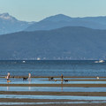 The banks are a great place for dogs to play at Spanish Banks Beach.- Vancouver B.C.'s Best Beaches + Swimming Holes