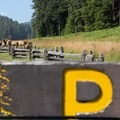 Prairie Creek Roosevelt Elk grazing in Elk Prairie.- Redwood National + State Parks