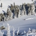 Fresh tracks off Red Lake Peak, Carson Pass.- A GNARVEMBER to Remember