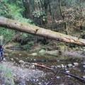 Exploring along Aptos Creek, Forest of Nisene Marks State Park.- Adventurer's Guide to Santa Cruz