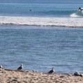 Trestles is home to world-class surf breaks.- Last-Minute Spring Break Ideas