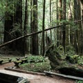 Pioneer Trail in Armstrong Redwoods State Natural Reserve.- Guide to Bay Area Camping