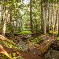 Ancient Cedars Trail.- 20 Amazing Adventures Near Vancouver, B.C.