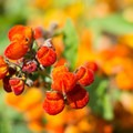 Unidentified species (help us identify it by providing feedback).- The Butchart Gardens