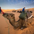 Camels are useful when exploring the Erg Chebbi Dunes, especially for carrying gear.- Add a Stamp to Your Passport