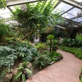 Tropical greenhouse at Los Angeles County Arboretum.- Botanical Gardens Blooming Across the Country