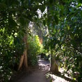 Prehistoric forest at Los Angeles County Arboretum.- Botanical Gardens Blooming Across the Country