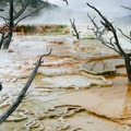 Mammoth Hot Springs in Yellowstone National Park.- Mammoth Hot Springs