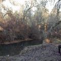Fern Ridge Wildlife Area, Applegate Unit.- Western Birding Hotspots