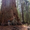 The General Sherman Tree, located in the Giant Forest, is known as the largest tree (by volume) in the world.- The Legacy of John Muir
