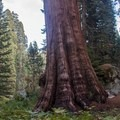 Giant sequoia trees near Crescent Meadow.- 30 Must-Do Adventures in California