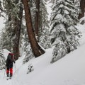 Exploring winter trails after a fresh blanket of snow.- Heavy Snow on the Way for the Sierra