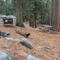 Typical campsite in Azalea Campground.- Destination Sequoia + Kings Canyon: A Westslope Itinerary