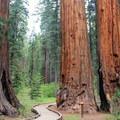 North Grove Trail.- A Guide to Fall Adventure in California